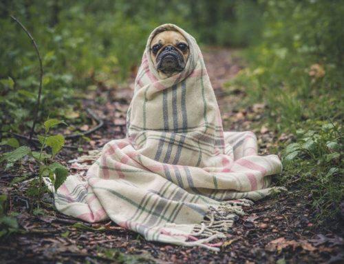 Schlafklima: Die richtige Bettdecke finden