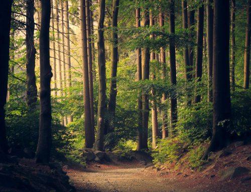 Naturbettwaren im Trend